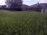 lawn-mowing-services-before