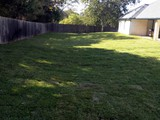 lawn-sod-installation-after