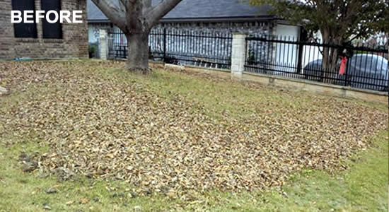 Professional Lawn Cleaning and Leaf Removal in Copperas Cove Texas